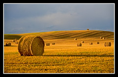 Long Shadows (stevenbulman44) Tags: landscape gold farm land hay fotografia bale goldstar mywinners worldlandscapes impressedbyyourbeauty