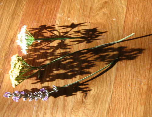 Cool flower shadows