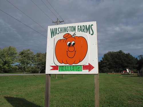 Washington Farms pumpkin day!