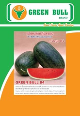 GreenBull84 green bull brand   hat giong dua hau, hat giong dua leo, quo qua bi dao bi do  60 k (WatermelonSeeds) Tags: thailand watermelon winner brand jumbojet hoa greentiger cnh greenocean thailan pumkinseeds qu watermelonseeds marigoldseeds greenbull c cucumberseeds chtlngcao duahau khqua dahu chatluongcao cbit dualeo b htgingdahu daleo duachuot laif1 wwwgreenbullseedcom gingcytrng cydahu htginghoa ccloi greenbull84 thailanchatluongcao hatgionglaif1 hatgiongbidao thongthae waxgourdseeds hatgiongbido grandvangthong supergreenbull wwwhatgiongdauhaucom hatgiongdualeo seven99 hatgionghoacucvantho phuphanphet wwwhatgionghoacucvanthocom phuphanthong hatgiongcucvantho hatgionghoavantho marigoldseed hatgiongvantho gingdahu htgingtchun nhpkhutthilan greenbullseed dahucbit ccloirau bao grandmekong greentiger51 wwwhatgiongduahaucom hatgiongduahau hatgiong giongduahau giongdualeo hatgiongduachuot giongduachuot trongduahau trongduahaudep duahaudep