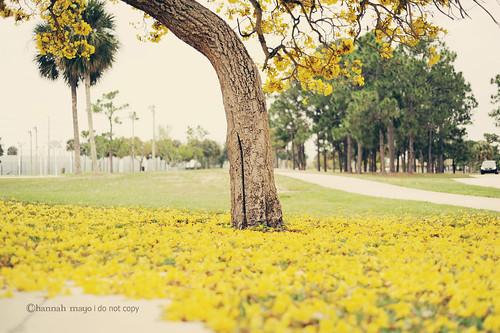 blanket of blooms