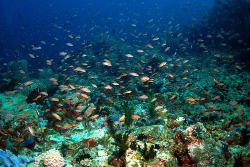 菲律賓阿尼洛保護區同時也是著名潛點,珊瑚礁健康狀態良好且生物繁多。