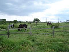 DSC00040 (ticherock) Tags: horse lake festival river greek europe hellas greece greeks thrace evros εκκλησια ελλαδα tyxero tichero tihero θρακη λιμνη εβροσ όμιλοσ αλογα φεστιβαλ τυχερο τυχερού ιππικόσ