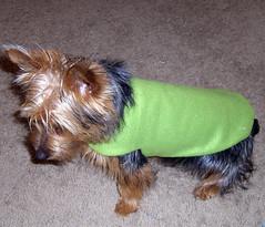 puppy coat 2