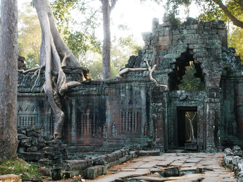 Trees at Preah Khan