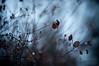 "Cold Winter Day <a style=""margin-left:10px; font-size:0.8em;"" href=""http://www.flickr.com/photos/8402379@N06/3296401712/"" target=""_blank"">@flickr</a>"