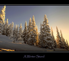 A Winter Stand (Christopher J. Morley) Tags: morning winter mountain canada cold snowshoe bc solo snowcoveredtrees naturesfinest garibaldiprovincialpark fotocyfer