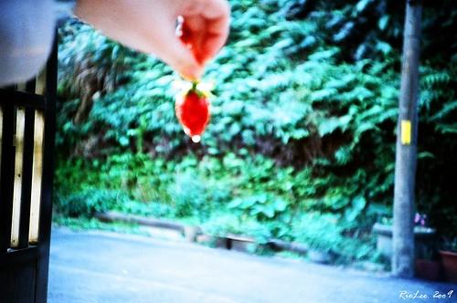 依 幾 果 // Strawberry by you.