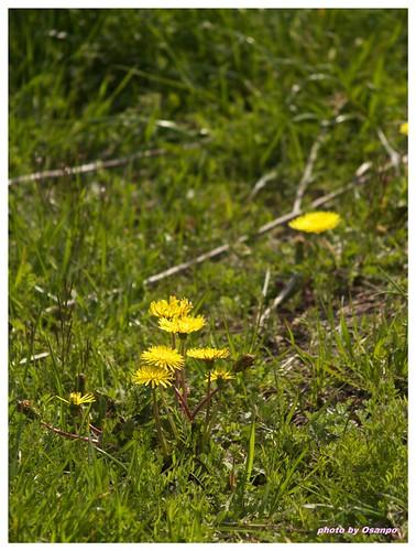 Spring days 090320 #05