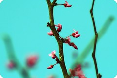 HBW! ( dragonflyriri  (Limited Flickr Time)) Tags: pink blue flower tree sc spring aqua branch bright bokeh teal twig bloom bud hbw extremebokeh img8727 bokehwhores bokehaddiction bokehaddict