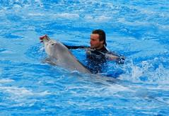 Capturer un dauphin....Mediterraneo Marine Park --- Malta (CaptiveDolphins-vs-WildDolphins) Tags: malta dolphins shame delphinarium malte mediteraneo maltagozo marinelands mediterraneomarinepark captivedolphins themediteranneomarineparkinmaltaisashame unehonte unaverguenza dauphinscaptifs themediteranneomarineparkinsliemathemediteranneomarineparkinmalta themediteranneomarinepark dauphinsdelfines delfinescautivos