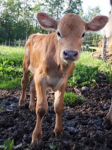 'Soyez pas vache, venez discuter avec nous ! :)