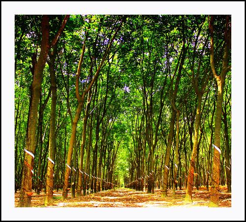 Rosario Cabeltis Apostol 拍攝的 Trees。