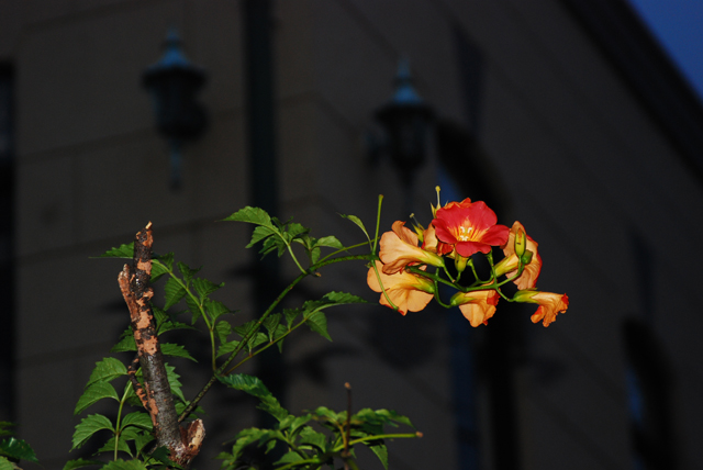 Flash Flower