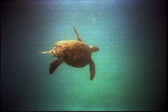 swimming fast to the deep sea (~yaya~) Tags: canon malaysia prima perhentian pulau as1 dnp400