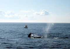 Whales_boat2