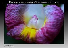 Thanks all for your comments again(: (EricBronson's Photography) Tags: flower macro nature interesting singapore wildlife breathtaking myeverydaylife aplusphoto ericbronson thebestofday