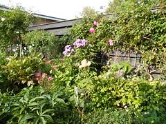 0909260044 (vonzies) Tags: flowers summer dutch fujifinepix