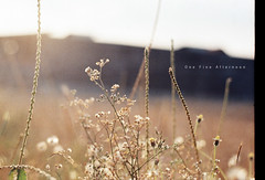 One Fine Afternoon (khaniv13) Tags: light sun film field grass nikon afternoon dof paddy bokeh fe wildflower 50mmf18seriese dnpcenturia200 khaniv13