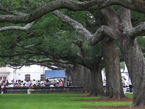 Oaks of Dillard University
