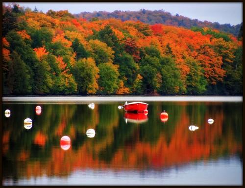Zénitude d'automne
