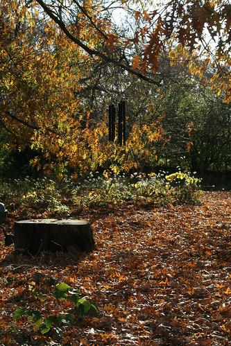back yard carpet of oak leaves