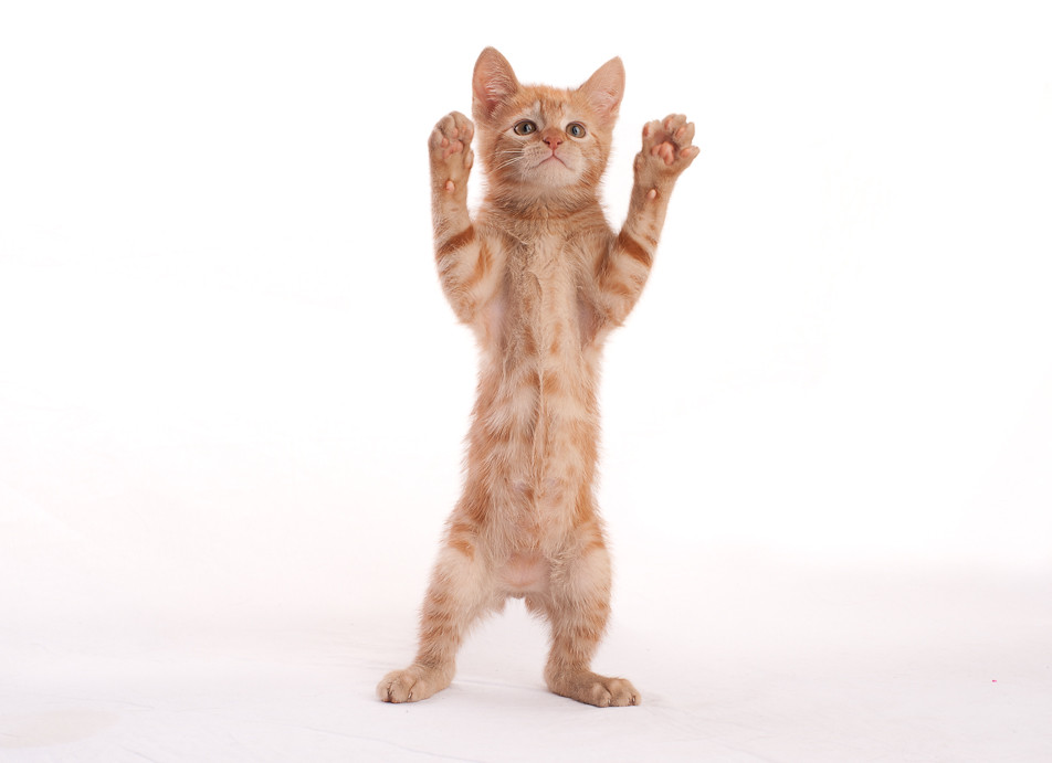 Dancing Kitten Says...