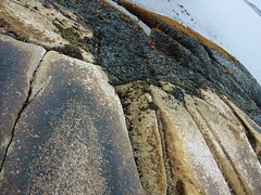 Peggy's Cove seaweed