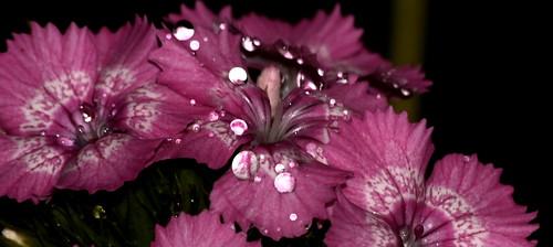 After Rain, Reflective