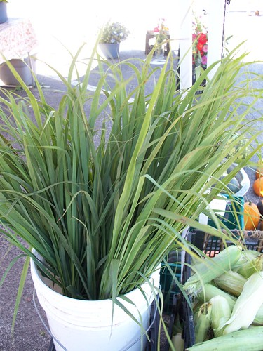 Lemon grass - Manitowoc Farmers' Market