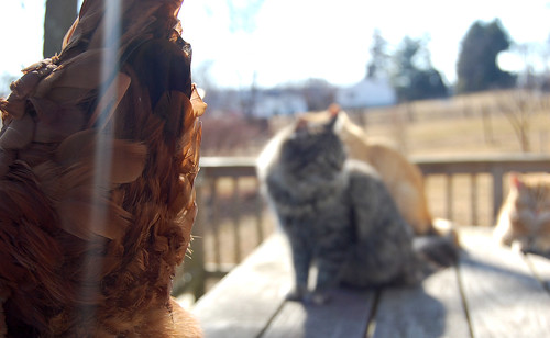 always in their face