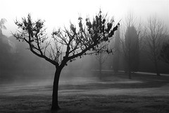 Desolation tree (Valerio Iossa) Tags: bw tree nature alberi blackwhite bn firenze biancoenero platinumheartaward artlegacy bwartawards monochromeaward