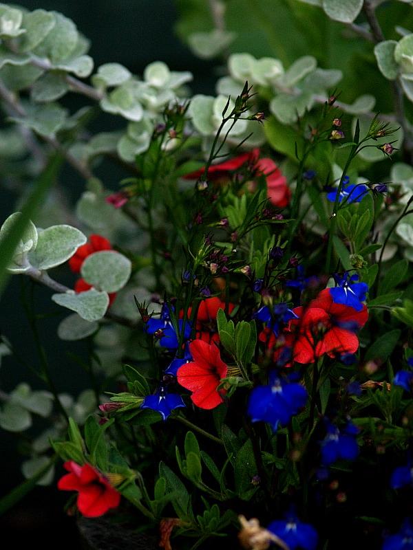 july 08 planter