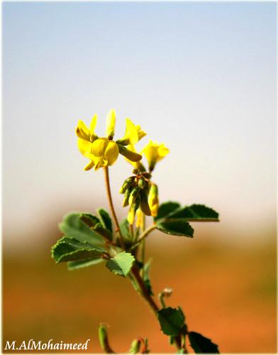 Flower &