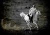 الخيل من فوقها شجعان ,, أسود وإنمور وذيابه (Missy   Qatar) Tags: horse blackwhite desert missy qatar alkhater mohammedbinali