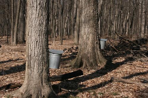 Ryerson Woods 022 (15-Mar)