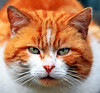 what are you looking at (eileen.mccausland) Tags: animals cat mwqio