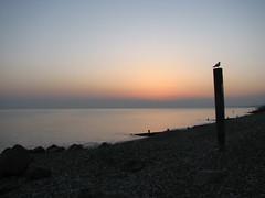 Milford_0010 (Julian Nicholls) Tags: sunset gull milford groyne