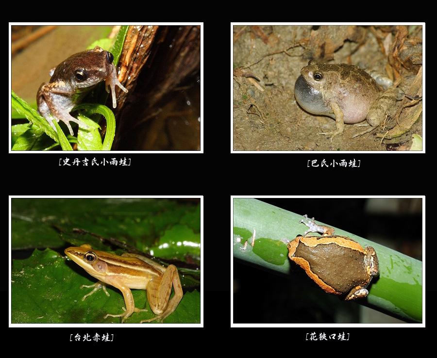 台灣32種青蛙