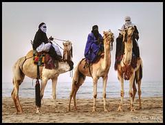 Unusual Scene ! (Bashar Shglila) Tags: light sunset sea beach water colors photo sand photographer photos photographers camel photograph unusual libya camello  touareg    camellos libyen     lbia  libi libiya aplusphoto liviya libija    tagelmust     lbija  lby libja lbya liiba livi    potd:country=menaar