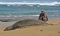 IMG_2384 (danesk) Tags: monk seal