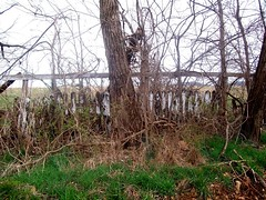 Fence (proudnamvet........Patriot Guard Riders) Tags: abandoned overgrown rural decay