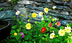 Against the stone wall (KurtQ) Tags: flowers portugal july stonewall 07 kurtq