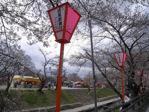 09-04-01【桜】@大和高田