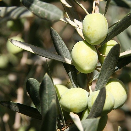 Olives Close Up on stock exchange