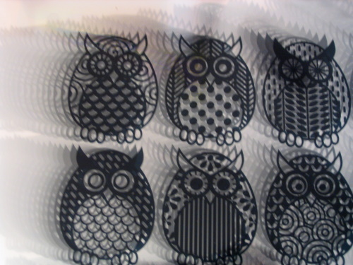 Owl Parliament Transparencies