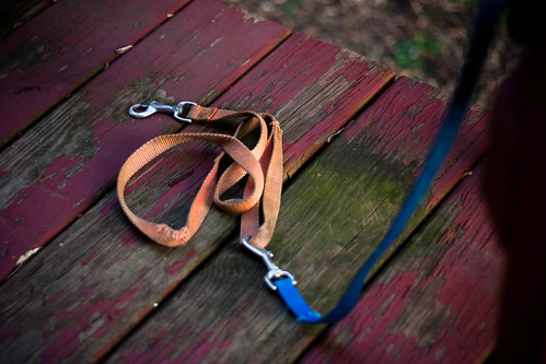 The Battered Leash by whyamiKeenan