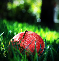 Der Apfel fllt nicht weit vom Stamm (Spidi1981) Tags: red summer food color tree green apple nature grass fruit garden photography nikon sommer natur grn sdtirol d800 umwelt d4 nikond80 colorphotoaward