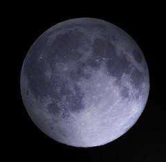 Blue Moon (Linuxdrive) Tags: stella light moon night canon star satellite astro ufo luna full 300mm astrophotography astrofotografia planet wars notturna notte piena cratere pianeta chiaro