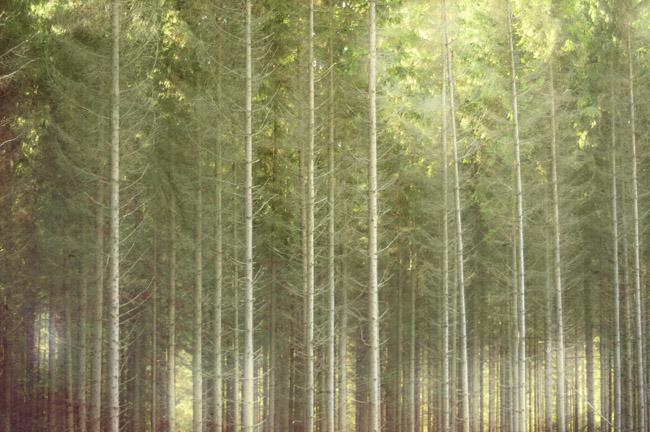 skog5